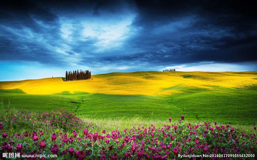 壁纸 草原 成片种植 风景 植物 种植基地 桌面 1024_640
