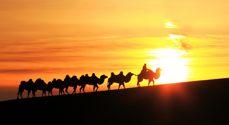 早餐后乘旅游汽车前往腾格里沙漠腹地,大漠中的伊甸园---内蒙古阿拉善【通湖草原】(含电瓶车)(车程40分钟,游览2小时)。抵达通湖草原,感受热情的蒙古族风情接待,向团员敬献哈达,聆听优美豪放的蒙古族敬酒歌。祭拜蒙古族祭天祭祖的敖包山并体验敖包相会的乐趣。与美丽辽阔的大草原亲密接触!(所有景区娱乐项目客人自理。如:骑马、骑骆驼、沙海冲浪车等等)。观看扎马宴-蒙古特色表演,(用餐时演出30分钟)。 午餐后乘坐旅游汽车前往中国第四大沙漠、中国十大最好玩的地方国家AAAAA级旅游区、【沙坡头旅游区】(距离40公里